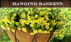 Hanging Baskets and Liners