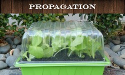 Plant Propagation Supplies For The Garden