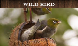 bird_seed_and_bird_feedbers_to_keep_the_birds_healthy_in_my_garden