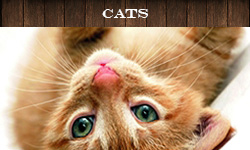 all_the_cat_products_your_cat_wants_toys_collars_leshes_and_other_assesories