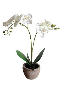 Artificial Dainty White Orchid in Pot